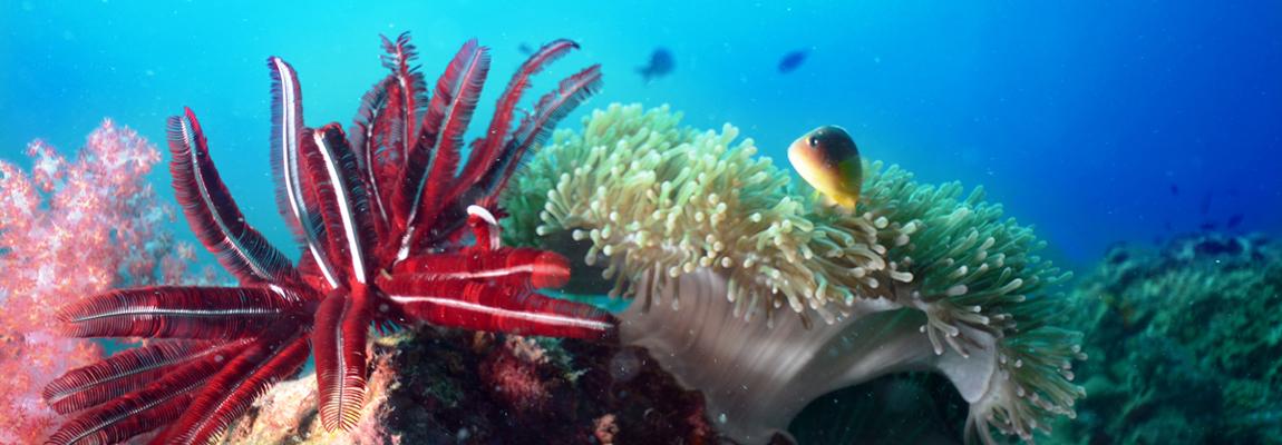 FOTO: Vita e colori marini